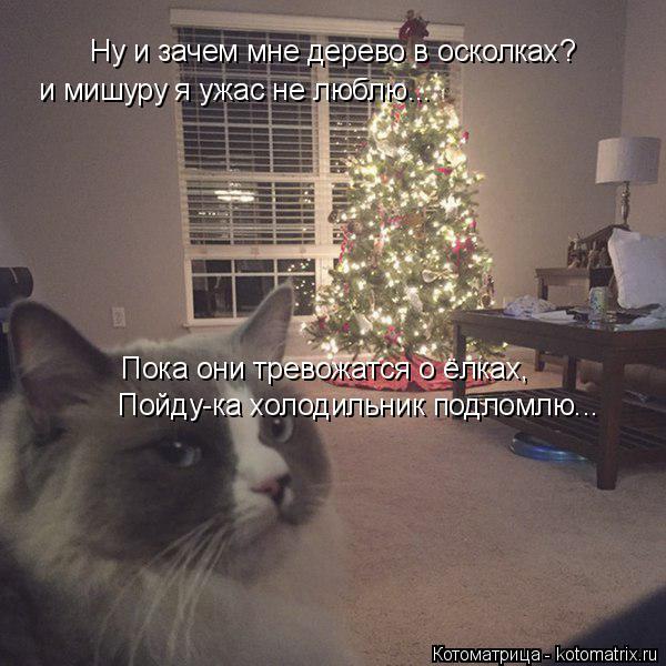 Котоматрица: Ну и зачем мне дерево в осколках? и мишуру я ужас не люблю... Пока они тревожатся о ёлках, Пойду-ка холодильник подломлю...