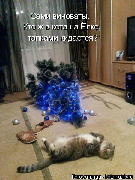 Котоматрица: Сами виноваты... Кто ж в кота на Ёлке, тапками кидается?
