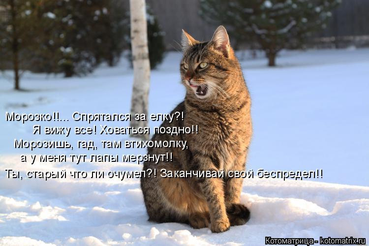 Котоматрица: Морозко!!... Спрятался за елку?! Я вижу все! Ховаться поздно!! Морозишь, гад, там втихомолку, а у меня тут лапы мерзнут!! Ты, старый что ли очумел?!