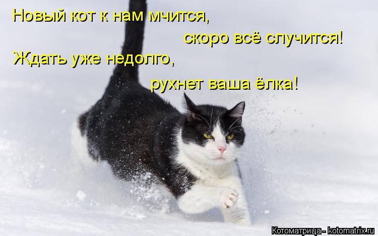Котоматрица: Новый кот к нам мчится,  скоро всё случится! Ждать уже недолго,  рухнет ваша ёлка!