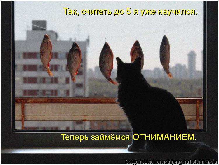 Котоматрица: Так, считать до 5 я уже научился. Теперь займёмся ОТНИМАНИЕМ.