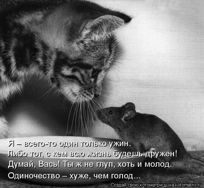 Котоматрица: Я – всего-то один только ужин. Либо тот, с кем всю жизнь будешь дружен! Думай, Вась! Ты ж не глуп, хоть и молод. Одиночество – хуже, чем голод...