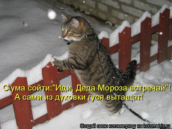 """Котоматрица: С ума сойти:""""Иди, Деда Мороза встречай""""! А сами из духовки гуся вытащат!"""