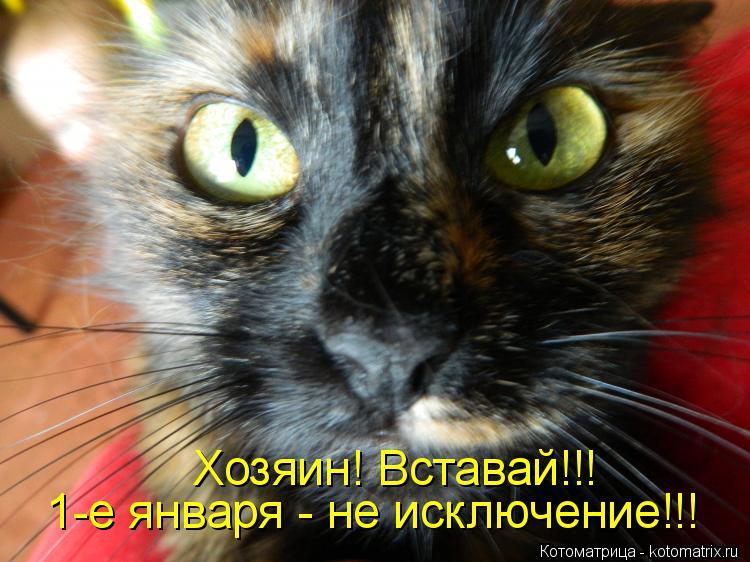 Котоматрица: Хозяин! Вставай!!! 1-е января - не исключение!!!