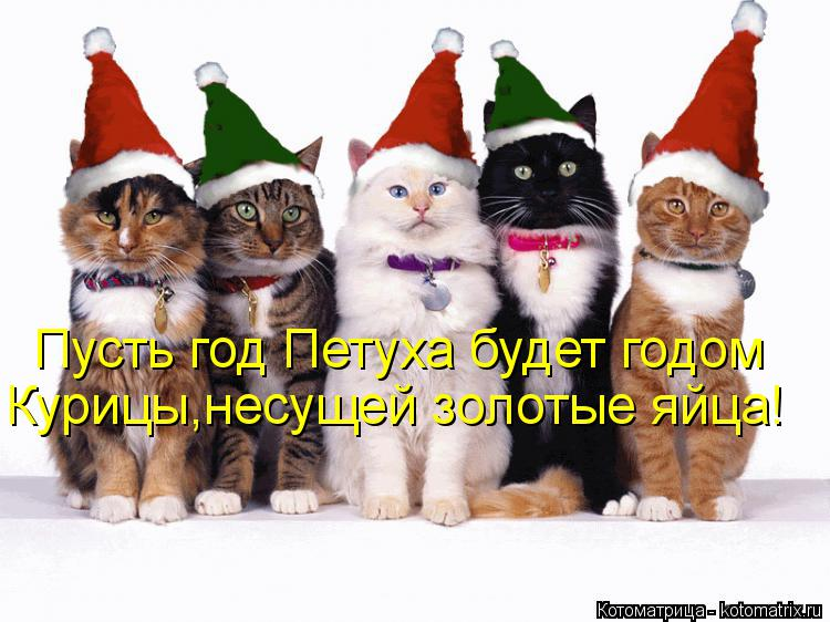 Котоматрица: Пусть год Петуха будет годом Курицы,несущей золотые яйца!