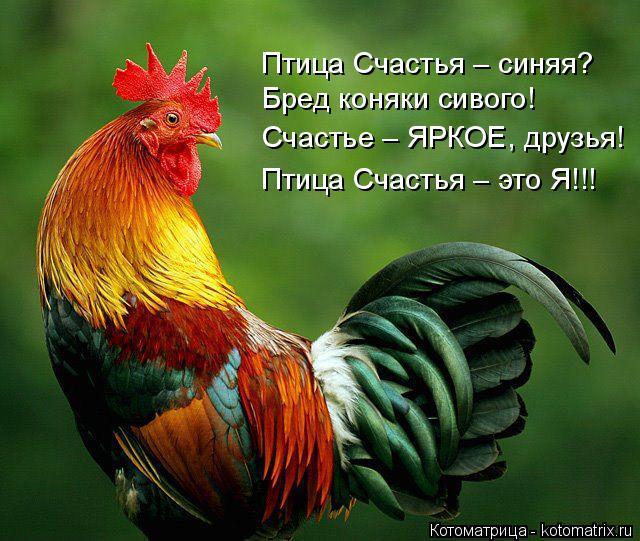 Котоматрица: Птица Счастья – синяя?  Бред коняки сивого! Счастье – ЯРКОЕ, друзья! Птица Счастья – это Я!!!