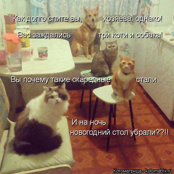Котоматрица: Как долго спите вы,          хозяева, однако! Вас заждались             три коти и собака! Вы почему такие скаредные            стали И на ночь новогодний с