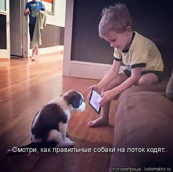 Котоматрица: - Смотри, как правильные собаки на лоток ходят..