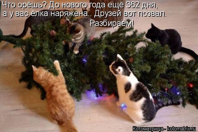 Котоматрица: Что орёшь? До нового года ещё 362 дня, а у вас ёлка наряжена.. Друзей вот позвал. Разбираем!