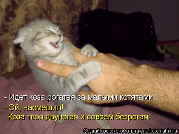 Котоматрица: - Идет коза рогатая за малыми котятами! - Ой, насмешил!  Коза твоя двуногая и совсем безрогая!