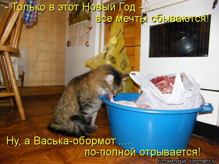 Котоматрица: - Только в этот Новый Год - все мечты сбываются! Ну, а Васька-обормот .... по-полной отрывается!