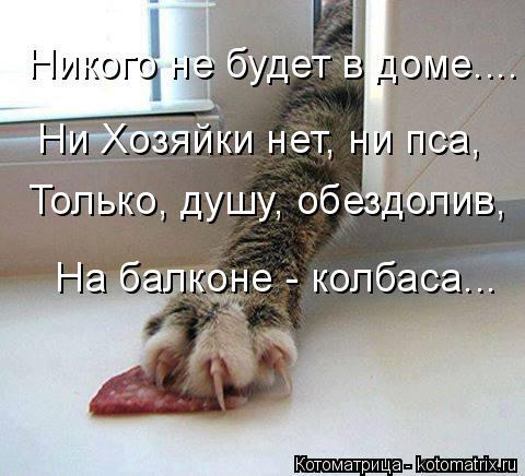 Котоматрица: Никого не будет в доме.... Ни Хозяйки нет, ни пса, На балконе - колбаса...  Только, душу, обездолив,