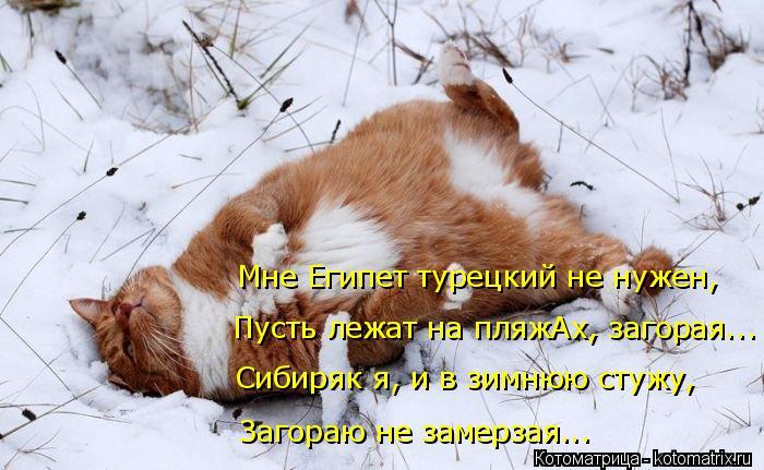 Котоматрица: Пусть лежат на пляжАх, загорая... Мне Египет турецкий не нужен, Загораю не замерзая... Сибиряк я, и в зимнюю стужу,