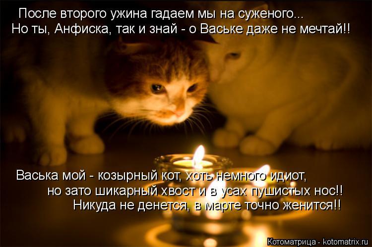Котоматрица: После второго ужина гадаем мы на суженого... Но ты, Анфиска, так и знай - о Ваське даже не мечтай!! Васька мой - козырный кот, хоть немного идиот,