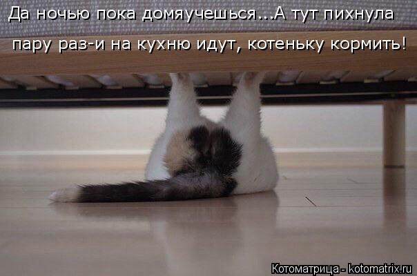 Котоматрица: Да ночью пока домяучешься...А тут пихнула  пару раз-и на кухню идут, котеньку кормить!