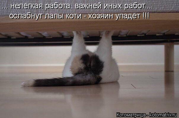 Котоматрица: ... нелёгкая работа, важней иных работ... ослабнут лапы коти - хозяин упадёт !!!