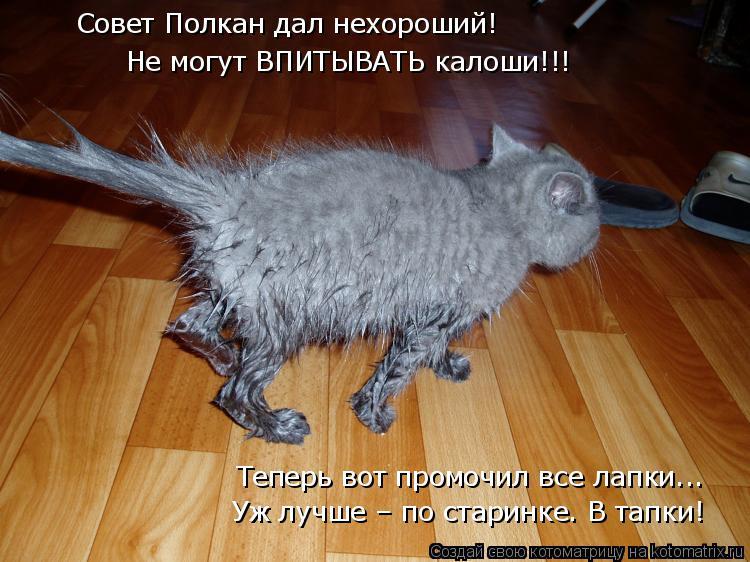 Котоматрица: Совет Полкан дал нехороший! Не могут ВПИТЫВАТЬ калоши!!! Теперь вот промочил все лапки... Уж лучше – по старинке. В тапки!