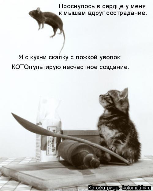 Котоматрица: Проснулось в сердце у меня к мышам вдруг сострадание. Я с кухни скалку с ложкой уволок: КОТОпультирую несчастное создание.