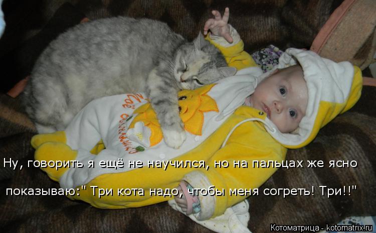 """Котоматрица: Ну, говорить я ещё не научился, но на пальцах же ясно показываю:"""" Три кота надо, чтобы меня согреть! Три!!"""""""