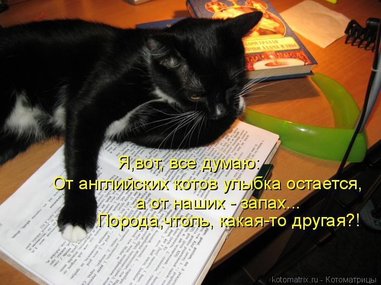 Котоматрица: От английских котов улыбка остается, а от наших - запах... Порода,чтоль, какая-то другая?! Я,вот, все думаю: