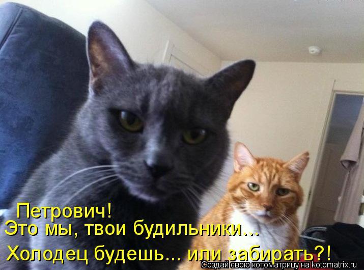 Котоматрица: Петрович! Это мы, твои будильники... Холодец будешь... или забирать?!