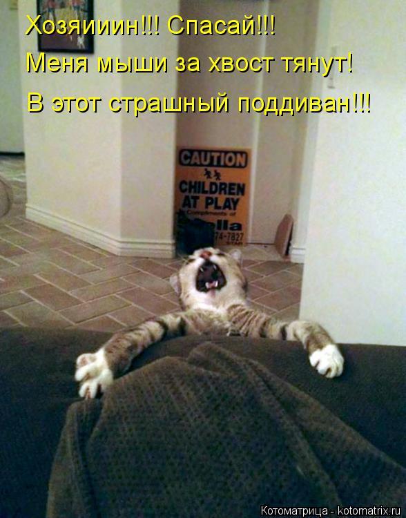 Котоматрица: Хозяииин!!! Спасай!!! Меня мыши за хвост тянут! В этот страшный поддиван!!!