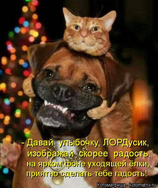 Котоматрица: - Давай  улыбочку, ЛОРДусик,  изображай  скорее  радость, на ярком фоне уходящей ёлки, приятно сделать тебе гадость!