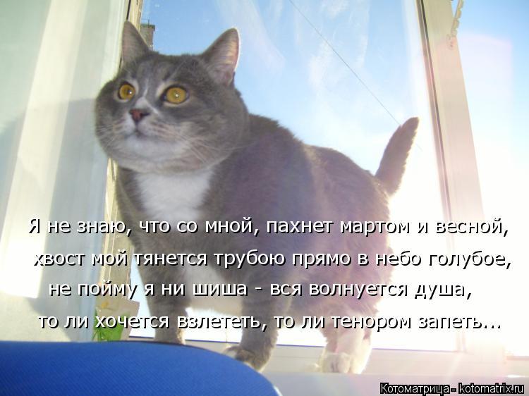 Котоматрица: Я не знаю, что со мной, пахнет мартом и весной, хвост мой тянется трубою прямо в небо голубое, то ли хочется взлететь, то ли тенором запеть... н