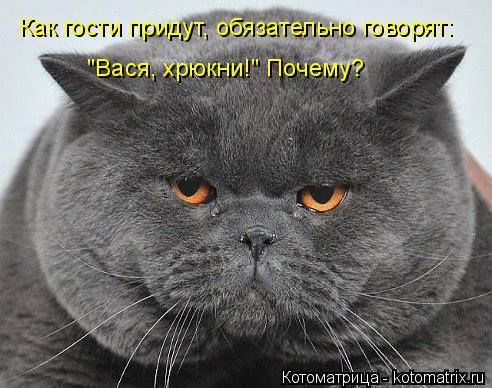 """Котоматрица: Как гости придут, обязательно говорят: """"Вася, хрюкни!"""" Почему?"""