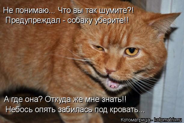 Котоматрица: Не понимаю... Что вы так шумите?! Предупреждал - собаку уберите!! А где она? Откуда же мне знать!! Небось опять забилась под кровать...