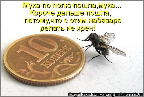 Котоматрица: Муха по полю пошла,муха... Короче дальше пошла, потому,что с этим набазаре делать не хрен!