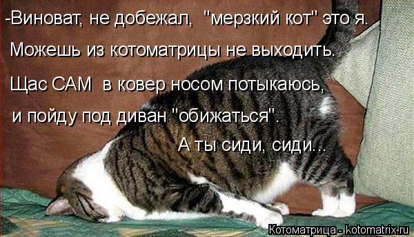 """Котоматрица: -Виноват, не добежал,  """"мерзкий кот"""" это я. Можешь из котоматрицы не выходить. Щас САМ  в ковер носом потыкаюсь,  и пойду под диван """"обижаться""""."""