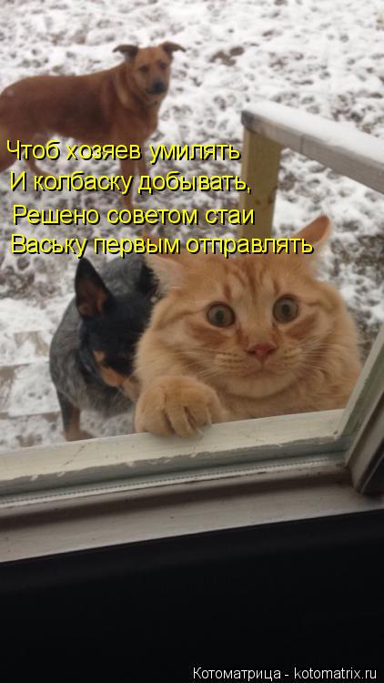 Котоматрица: Чтоб хозяев умилять И колбаску добывать, Решено советом стаи Ваську первым отправлять
