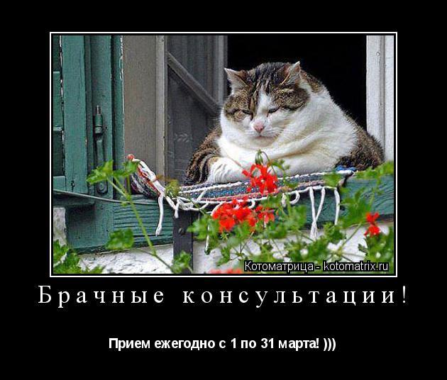 Котоматрица:  Брачные консультации!  Прием ежегодно с 1 по 31 марта! )))