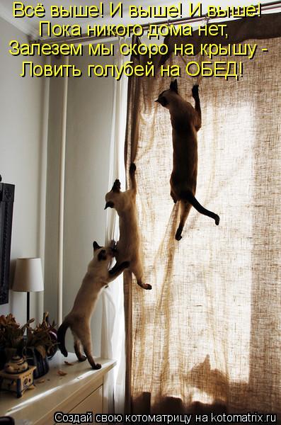 Котоматрица: Всё выше! И выше! И выше! Пока никого дома нет, Залезем мы скоро на крышу - Ловить голубей на ОБЕД!