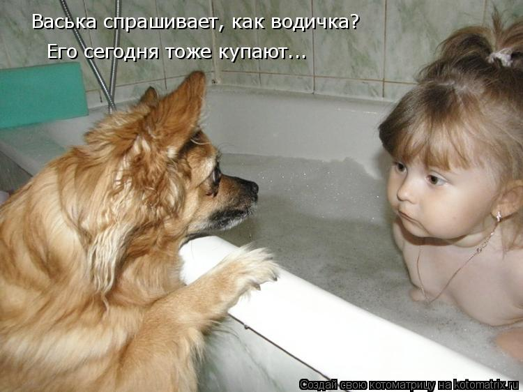 Котоматрица: Васька спрашивает, как водичка?  Его сегодня тоже купают...