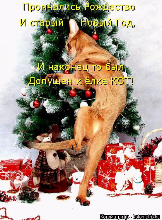 Котоматрица: Промчались Рождество И старый     Новый Год, И наконец то был  Допущен к ёлке КОТ!