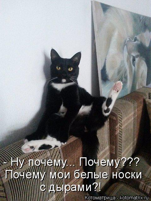 Котоматрица: - Ну почему... Почему??? Почему мои белые носки  с дырами?!