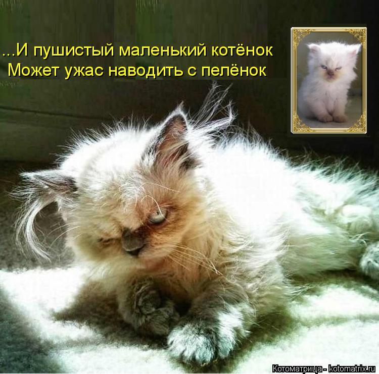 Котоматрица: ...И пушистый маленький котёнок Может ужас наводить с пелёнок