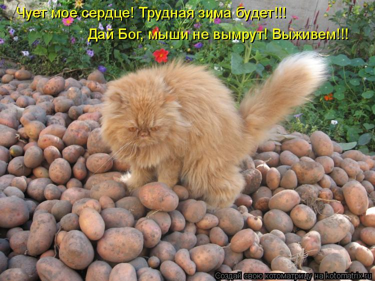Котоматрица: Чует мое сердце! Трудная зима будет!!! Дай Бог, мыши не вымрут! Выживем!!!