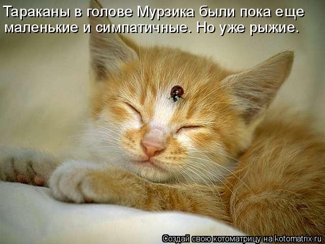 Котоматрица: Тараканы в голове Мурзика были пока еще маленькие и симпатичные. Но уже рыжие.
