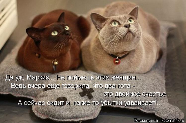 Котоматрица: Да уж, Маркиз... Не поймешь этих женщин... Ведь вчера еще говорила, что два кота - это двойное счастье... А сейчас сидит и  какие-то убытки удваив