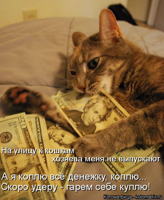 Котоматрица: На улицу к кошкам хозяева меня не выпускают А я коплю всё денежку, коплю... Скоро удеру - гарем себе куплю!