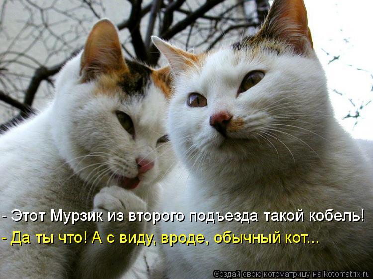 Котоматрица: - Этот Мурзик из второго подъезда такой кобель! - Да ты что! А с виду, вроде, обычный кот...