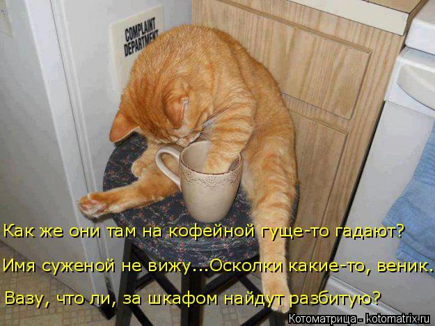 Котоматрица: Вазу, что ли, за шкафом найдут разбитую? Имя суженой не вижу...Осколки какие-то, веник...  Как же они там на кофейной гуще-то гадают?