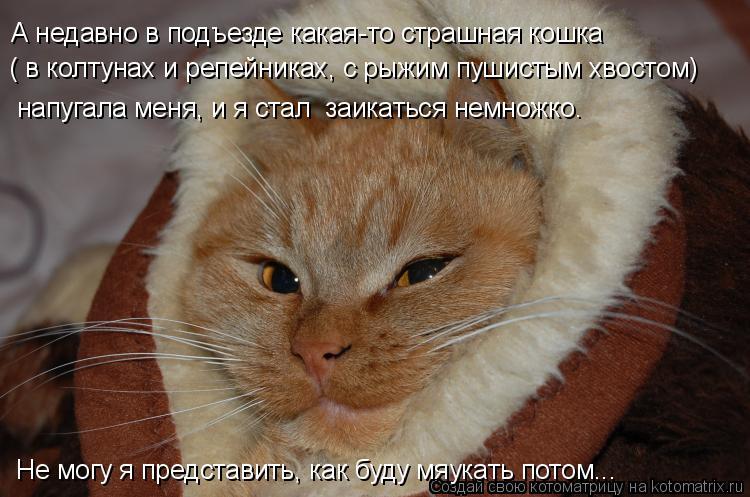 Котоматрица: А недавно в подъезде какая-то страшная кошка  ( в колтунах и репейниках, с рыжим пушистым хвостом) напугала меня, и я стал  заикаться немножко