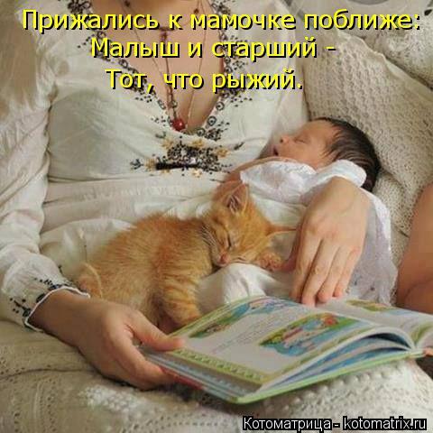Котоматрица: Прижались к мамочке поближе: Малыш и старший - Тот, что рыжий.