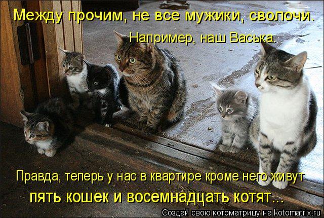 Котоматрица: Между прочим, не все мужики, сволочи. Правда, теперь у нас в квартире кроме него живут  пять кошек и восемнадцать котят...  Например, наш Васьк