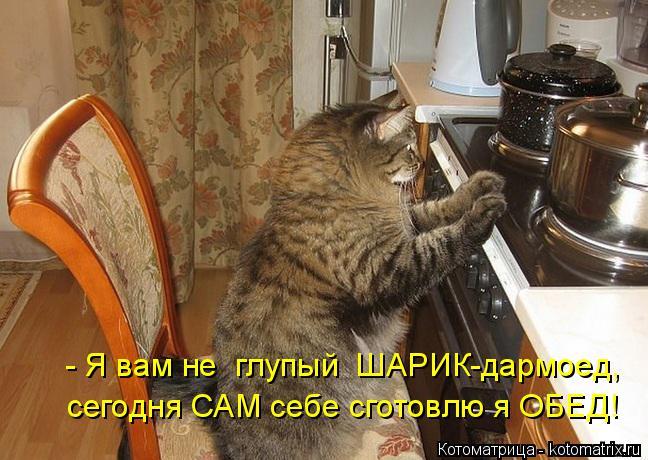 Котоматрица: - Я вам не  глупый  ШАРИК-дармоед, сегодня САМ себе сготовлю я ОБЕД!
