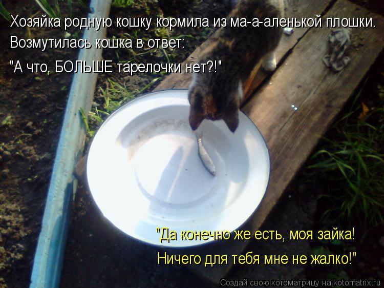 """Котоматрица: Возмутилась кошка в ответ: Хозяйка родную кошку кормила из ма-а-аленькой плошки. Ничего для тебя мне не жалко!""""  """"Да конечно же есть, моя зайка"""